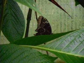 Butterfly Gardeb
